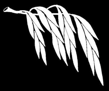 Гравировка ветки ивы для памятника ДВ3
