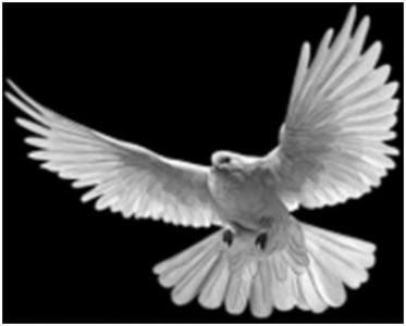 Гравировка белого голубя 21