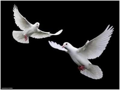 Гравировка двух голубей на гранитный памятник 16