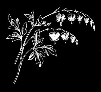 Гравировка полевых цветов ЦВ41