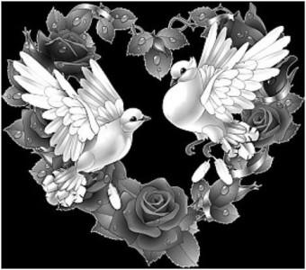 Гравировка голубей 18