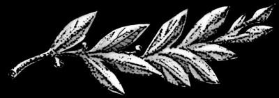 Гравировка лавровой ветви ДВ7