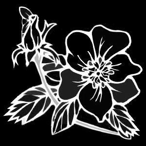 Гравировка цветка ЦВ18